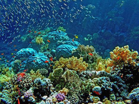 korallzátony 7