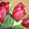Tulipán-Goda Barbara verséhez