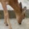 Bambi eszik.