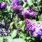 a tavaszi kerti virágok 002