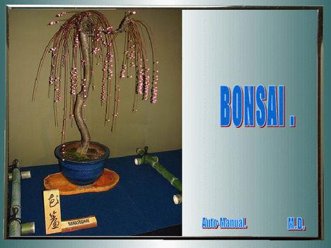 Bonsain 33