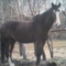 én lovas tel 001