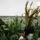 Kaktuszaim-001_742681_26534_t