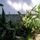 Kaktuszaim-002_742682_16299_t