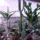 Kaktuszaim_742680_18857_t
