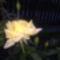 Virágaink 2