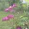 Virágaink 4