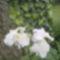 Virágaink 5