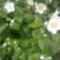 Virágaink 6