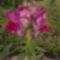 Virágaink 7