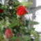 Virágaink 9