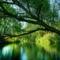 A természet mindig szép 14