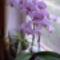 orhideám 32 virággal