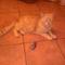 18 évesen fogott mezei pockot a mi cicánk!