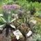 Kaktuszaim töredéke