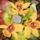 Orchideak_746301_18339_t