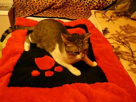 az új párnás-cica