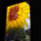 Napraforgó a szatmárhegyi alkotótábor ablakán