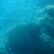 Korall a Vörös tenger mélyén 1