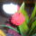 Viragaim-001_749699_53456_t