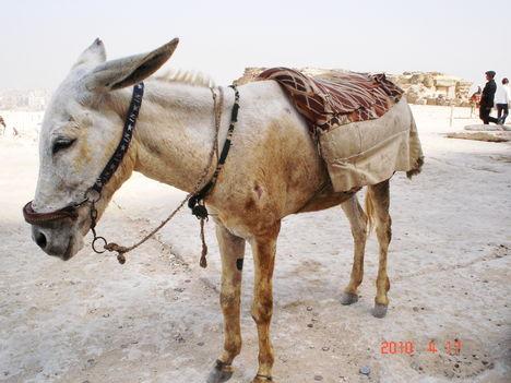 A Jézus lova
