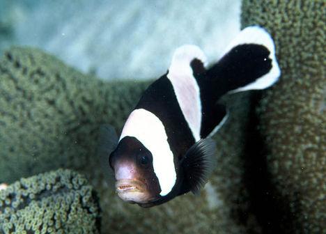 bohóchalak 1