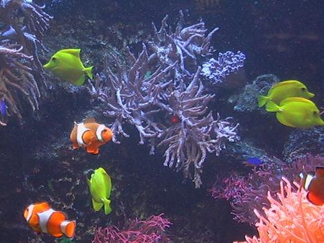bohóchalak 2