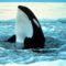 gyilkos bálna 4