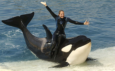 gyilkos bálna 5
