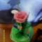 első rózsám