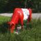 piros-fehér-piros tehén