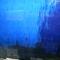 A nagy kékség...