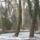 Arboretum-001_756394_46510_t