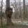Arboretum-002_756395_33101_t