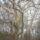 Arboretum-003_756396_83353_t