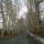 Dégi Erzsébet - Alcsútdoboz – arborétum, hóvirágmező