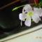DSCN0862  A termeszet minden viragnak valahogy magadja a sajat kulonleseget,,