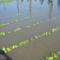 Árvíz helyzet Csorna 2010-06-05 006