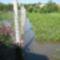 Árvíz helyzet Csorna 2010-06-05 014