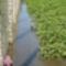 Árvíz helyzet Csorna 2010-06-05 015