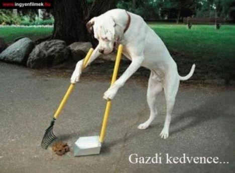 gazdi_kedvence_
