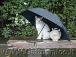 macskák az esőben