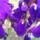 tavaszi képeim