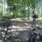 Árnyas erdőben