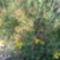 Mezei virágok
