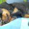 Diego alszik az ölemben