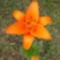junius2010 004