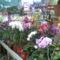 orchidea 20/ 22