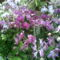 orchidea 20/ 23