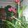 anyum virágai